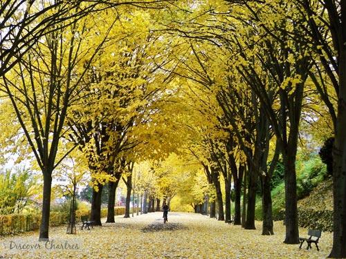 The autumn tunnel - Butte des Charbonniers, Chartres