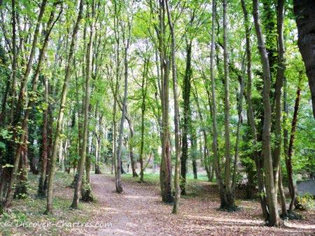 Promenade des Bords de L'Eure, Chartres - the trees