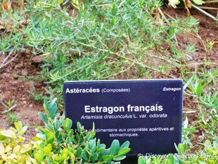 Estragon Français