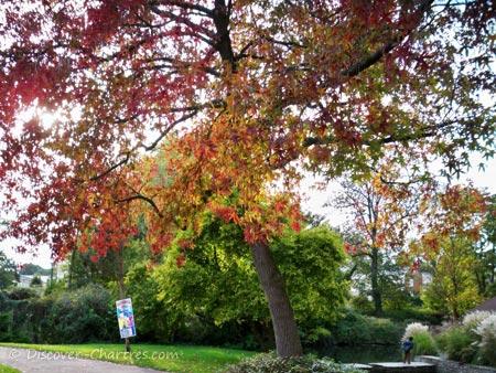 Autumn colors in La Petite Venise