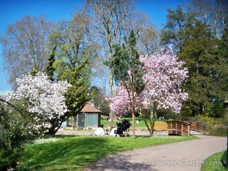 La Petite Venise, Chartres - the cherry blossom