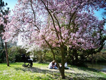 Cherry blossom in Parc des Bords de L'Eure