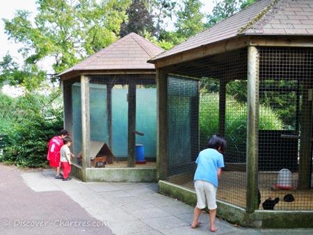 The fowl in Parc des Bords de L'Eure