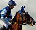 Horse Racin