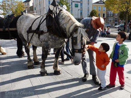 Horses at Grape Harvest Festiva